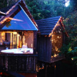TRAVEL // Hotspot – Phantom Forest Tree Suites, South Africa